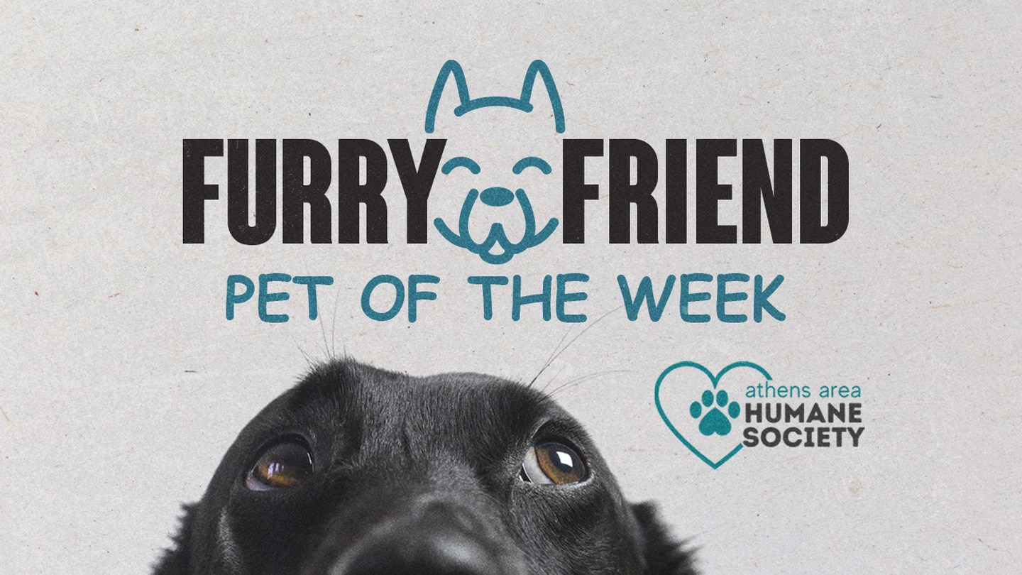 Help us find a fur-ever home!