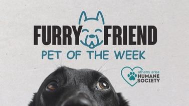 Furry Friend Pet Of The Week